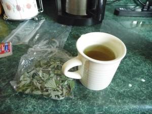 Mugwort Tea Images