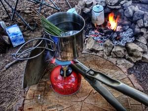 Pine Needle Tea Photos