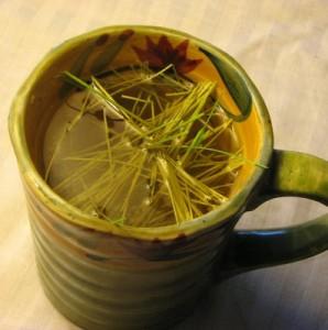 Pine Needle Tea Pictures