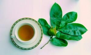 Soursop Tea Leaf