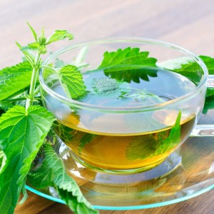 Nettle Tea Images