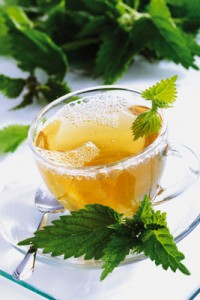 Nettle Tea Photos