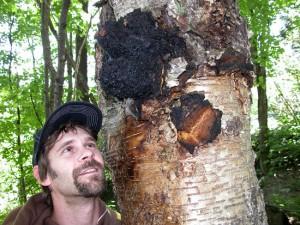 Chaga Fungus