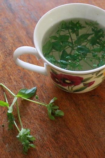 Benefits of chickweed tea