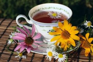 Echinacea Tea Pictures