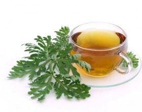 Wormwood tea dosage
