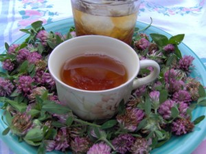 Red Clover Tea Photos