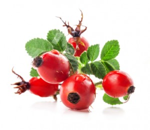 Rose Hip Fruits