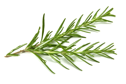 Buy Rosemary Leaf Tea Benefits How To Make Side Effects