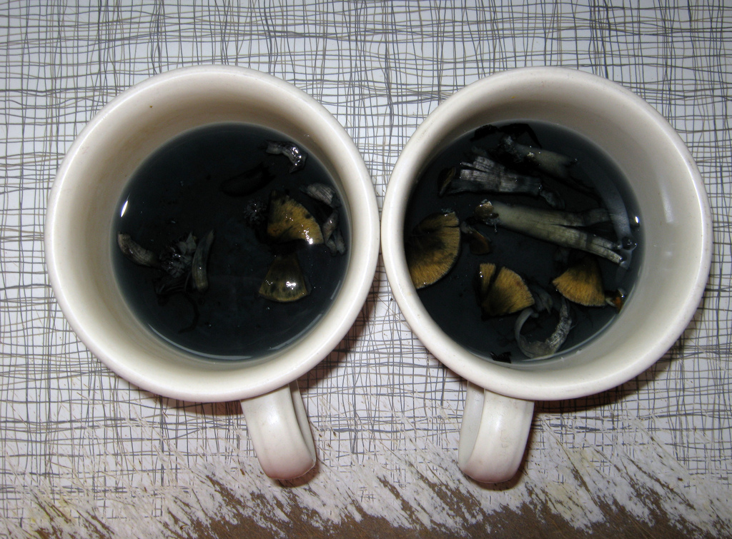 Buy Mushroom Tea Benefits How To Make Side Effects