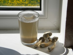 Mushroom Tea Pictures