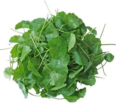 Where can i buy gotu kola