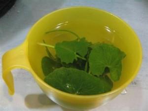 Gotu Kola Tea Images