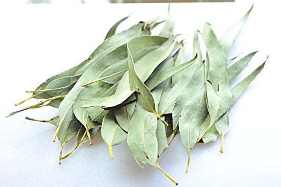 Eucalyptus Tea Benefits and Side Effects