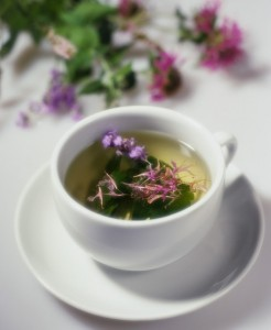 Skullcap Tea Pictures