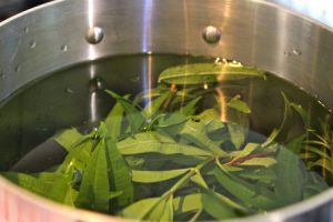 Lemon Verbena Tea Pictures