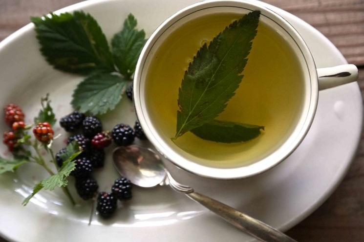 Buy Blackberry Leaf Tea: Benefits, How to Make, Side Effects