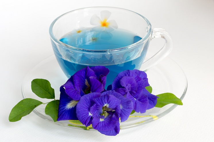 butterfly pea tea синий чай купить