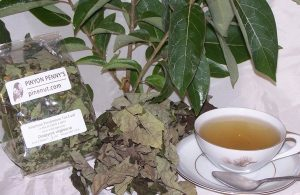 Persimmon Leaf Tea